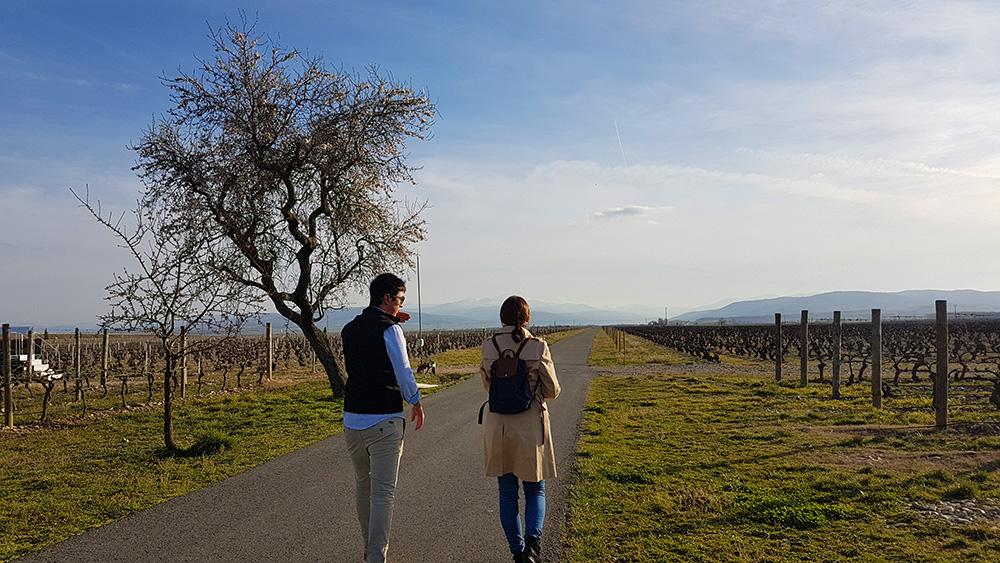 Walk among vineyards at La Emperatriz