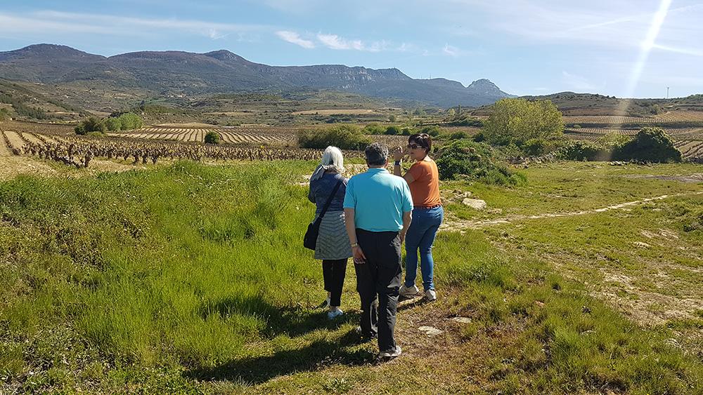 Walk among vineyards in Rioja